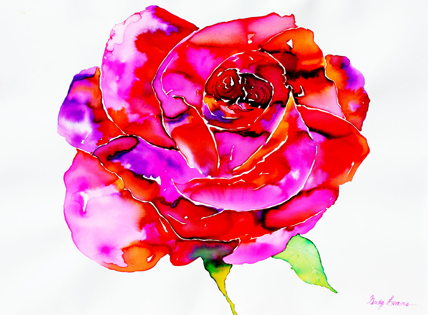 Watercolor Flowers Paintings | Art Gallery of Greg Evans