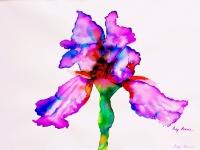 iris-purple-3-shade
