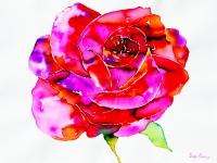 rose-pink-6