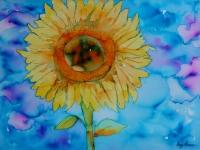 sunflower-with-bkg